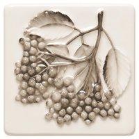Coupe De Fruits Blackcurrants 100 x 100