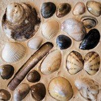 Noordzeeschatten 150 x 150